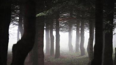 Photo of Το… foggy τοπίο στην προετοιμασία του Άρη (pics)